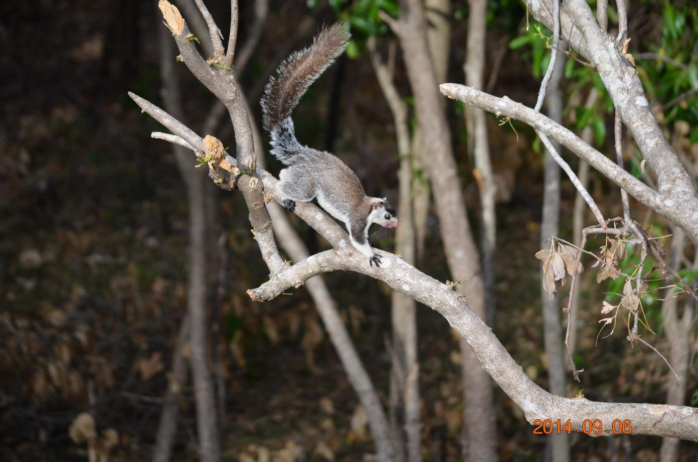 Kaudulla-National-Park-6